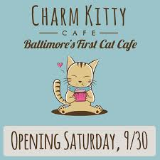 charm kitty cafe home facebook