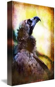 Seeking Vulture Portrait Of A Cinerous Vulture Seeking Guidance By Alan Shapiro