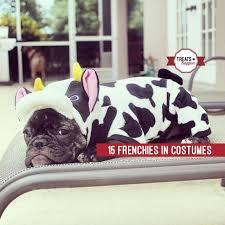 French Bulldog Costumes Halloween 15 Frenchies Winning Halloween Treats Happen