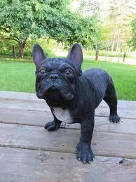 french bulldog dog standing statue johnnyappleseedhomeandyard