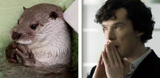 Cumberbatch Otter Meme - otters who look like benedict cumberbatch sherlock know your meme