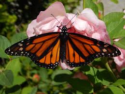 stater brothers thanksgiving hours back yard beauty of a butterfly in menifee menifee 24 7
