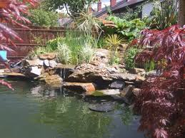 outdoor and patio backyard koi pond ideas in rectangle shape also