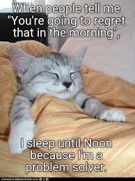 Cat Problems Meme - no problem cat meme problem best of the funny meme