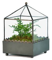 amazon com h potter square glass plant terrarium container patio