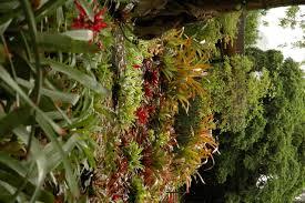 frangipani companions