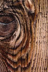 wood wallpaper for iphone or android tags woods woodgrain