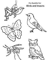 coloring pages insects bugs insect coloring pages 30 free insects and bugs for insect