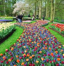flower garden in amsterdam amsterdam flowers