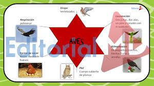 imagenes de animales carnivoros para imprimir los animales para niños animales terrestres y acuáticos