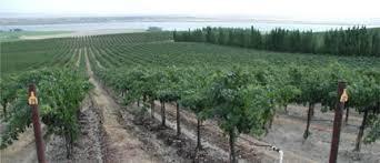 Growing Grapes Trellis Starting A Grape Vineyard