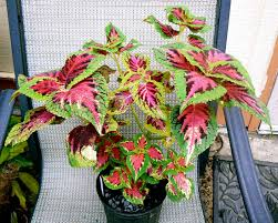 low light houseplants indoor house plants low light spurinteractive com