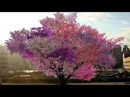 the special tree bearing many fruits