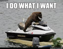 I Do What I Want Meme - littlefun i do what i want a bear on the water scooter