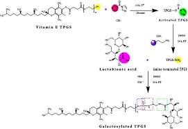 lactobionic acid conjugated tpgs nanoparticles for enhancing