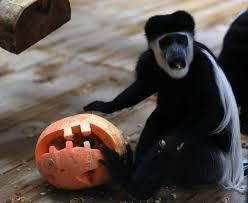 Scary Halloween Animals zoo gdansk