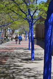 photos from the blue trees tree new mexico new mexico trees