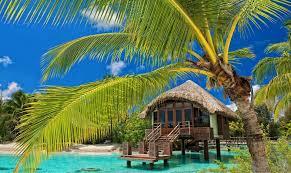 Palm Tree Wallpaper Palm Trees Resort Beach Tropical Water Bungalow Sea Summer