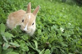 rabbit garden garden rabbit and deterrent tips