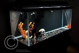 my halloween themed aquarium u2013 solid gold aquatics