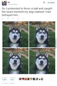 Tired Dog Meme - dog got fooled and is tired of this shit by mikejohnson meme center
