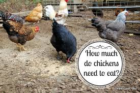 What To Feed Backyard Chickens by Homestead Blog Hop 4 The Easy Homestead