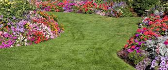 recommended grasses for regional climates