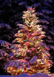 outdoor lighted christmas tree sacharoff decoration