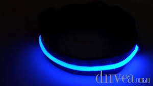 Light Up Dog Collar Blue Led Light Up Dog Pet Collar Youtube
