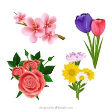 Images Of Tulip Flowers - tulip flower vectors photos and psd files free download