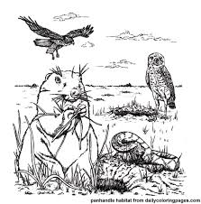 prairie dog coloring page animal habitat coloring pages