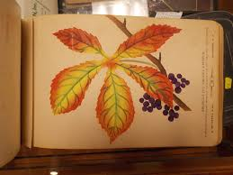 the specimen book of fruits flowers and ornamental trees