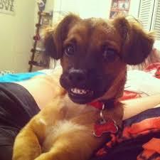 imagenes chistosas y tiernas lista definitiva las 38 imágenes de perros más chistosas tiernas y