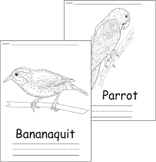 excellent design ideas tropicbird animal coloring pages coloring