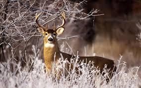 deer feeders vs deer attractants sweeney feeders
