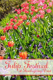 utah family activities series tulip festival at thanksgiving