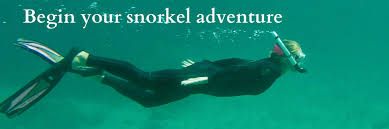 Arizona snorkeling images Home scuba professionals of arizona 9299 w olive ave 816 jpg