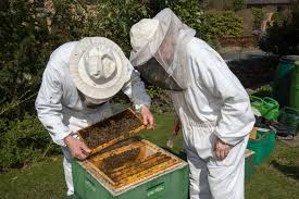 is beekeeping right for you perfectbee