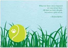 dog condolences 7 sympathy quotes to help cope with of a pet yourtango