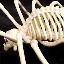 Halloween Decorations Skeleton Bones aliexpress com buy skeleton spider 100 plastic animal skeleton