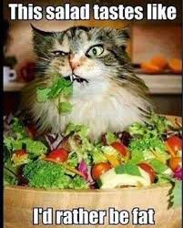 Salad Meme - cat dieting salad meme crystal eve