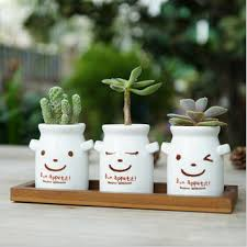 cute succulent pots best succulent herbs products on wanelo