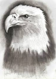 eagle drawing by hulkster77 on deviantart