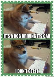 Dog Driving Meme - it s a dog driving its car i don t get it misc quickmeme