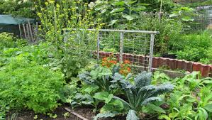 Permaculture And Sustainability Blue Planet Custodians - Backyard permaculture design