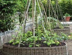 Edible Garden Ideas Edible Garden Pictures Gallery Garden Design