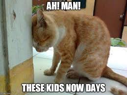Random Cat Meme - image tagged in kids cat meme imgflip