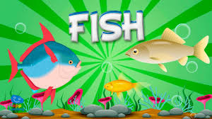 fish educational video for kids youtube