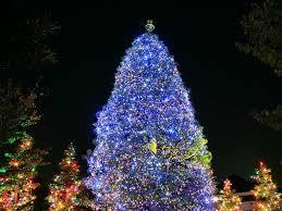 christmas tree beautiful blue legendary post