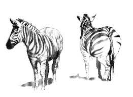 stephen powell wildlife artist sketches gallery page
